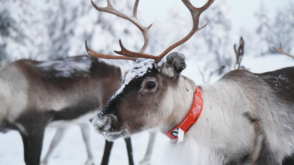 Adventure holidays families lapland