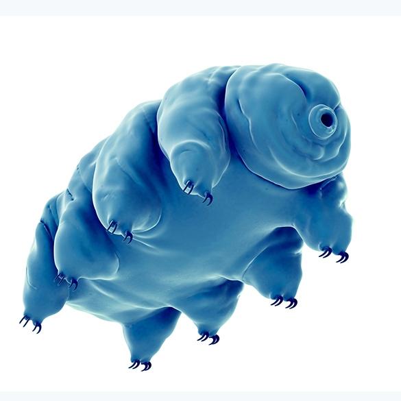 tardigrade-tile.jpg