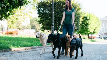 woman-walking-dogs