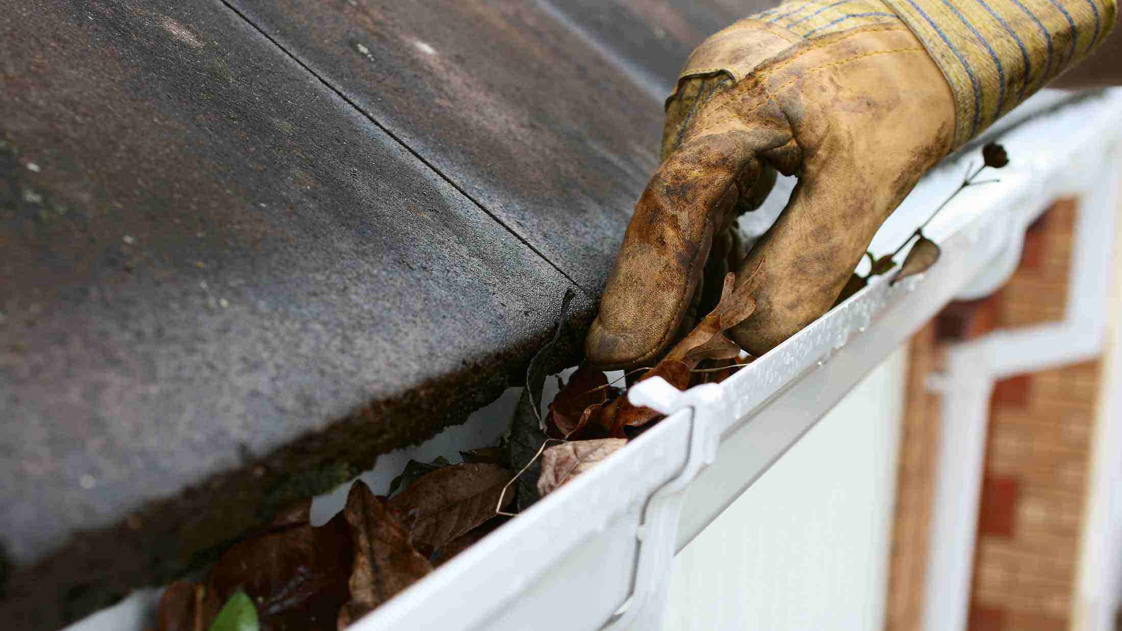 Glove being used to clear a gutter full of leaves