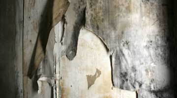 Dealing with dry rot
